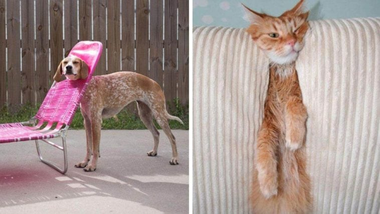 adorable photos pets struggling understand furniture fy 11