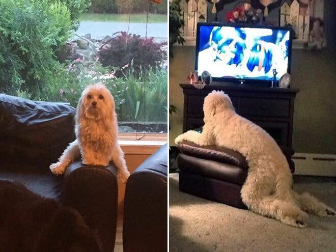 adorable photos pets struggling understand furniture fy 2