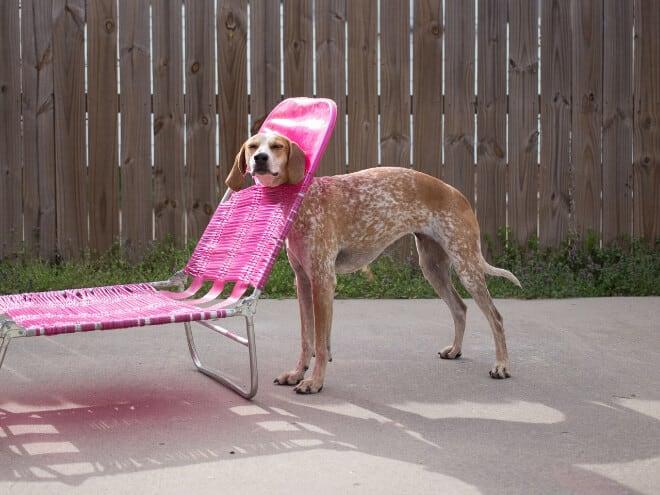 adorable photos pets struggling understand furniture fy 4