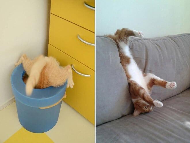 adorable photos pets struggling understand furniture fy 5
