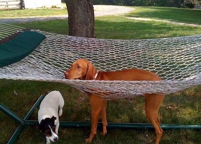 adorable photos pets struggling understand furniture fy 6