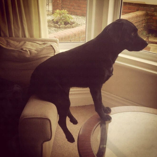 adorable photos pets struggling understand furniture fy 8