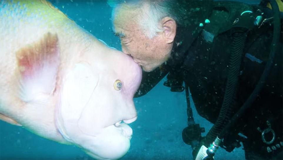 diver fish 25 year friendship hiroyuki arakawa japan fy 1