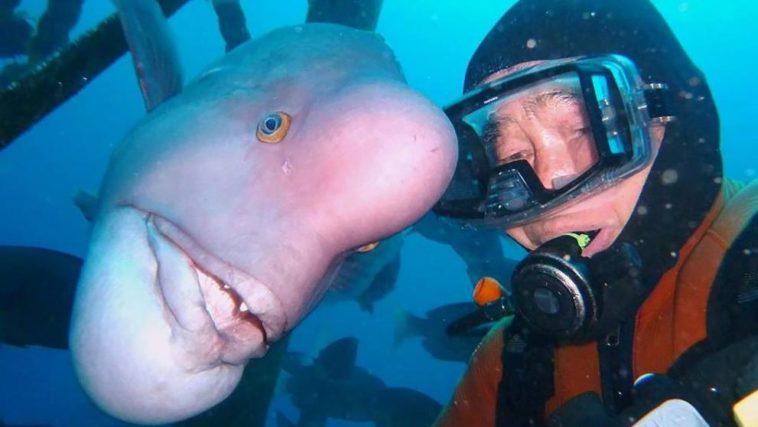 diver fish 25 year friendship hiroyuki arakawa japan fy 3