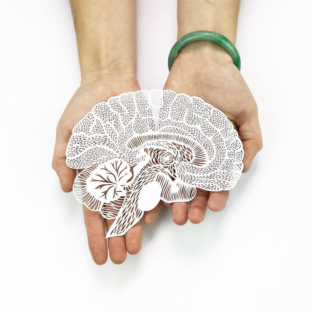 hand cut paper anatomy by ali harrison fy 3