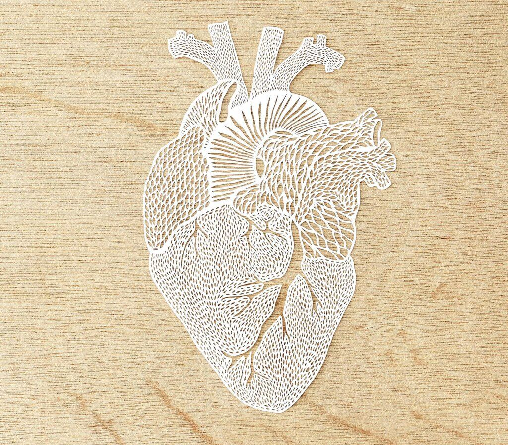 hand cut paper anatomy by ali harrison fy 5