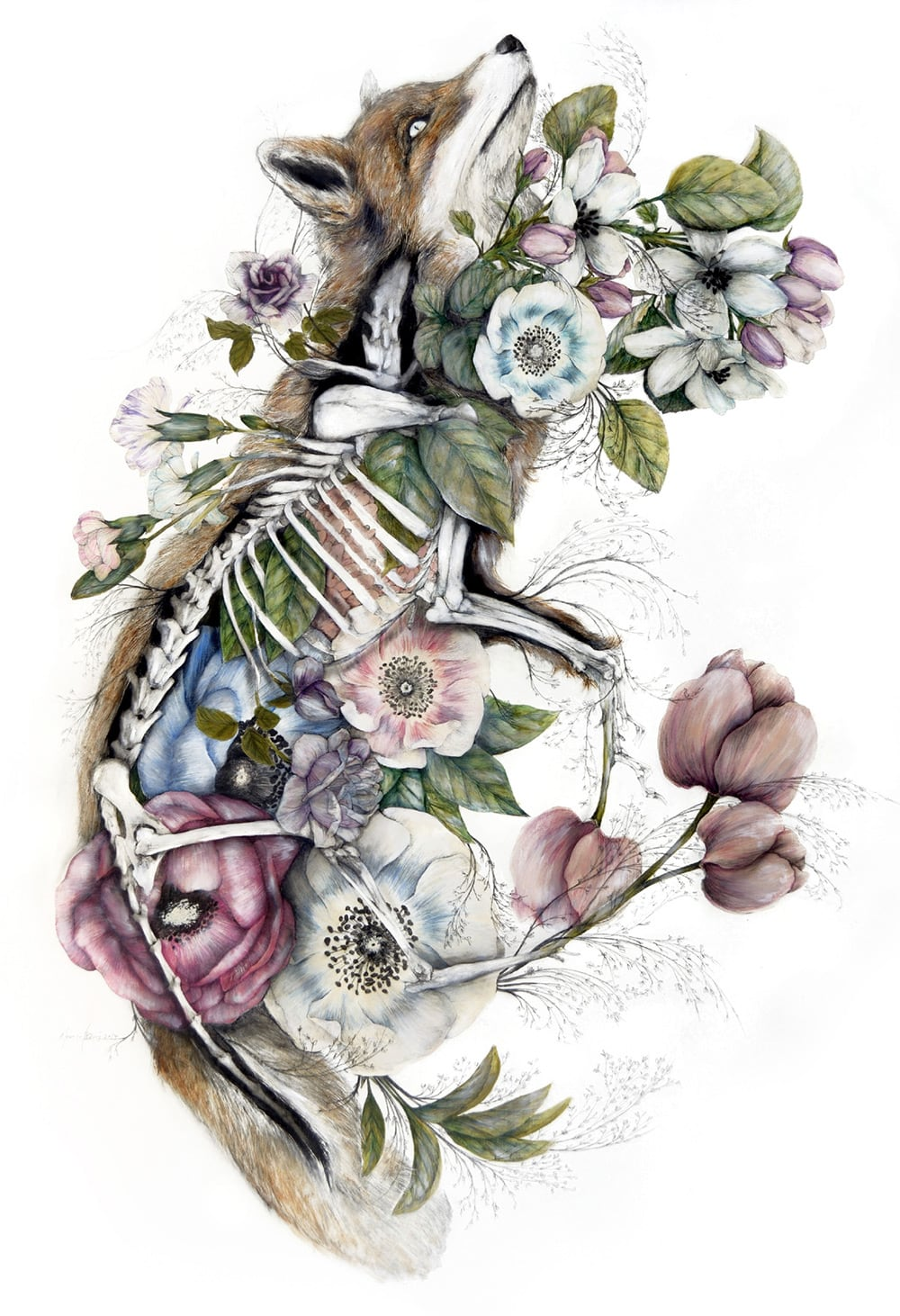 mimesis anatomical paintings flora and fauna nunzio paci fy 3