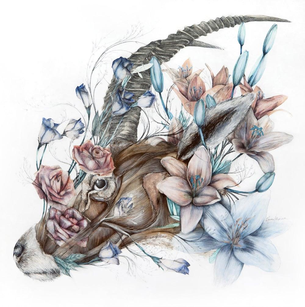mimesis anatomical paintings flora and fauna nunzio paci fy 4