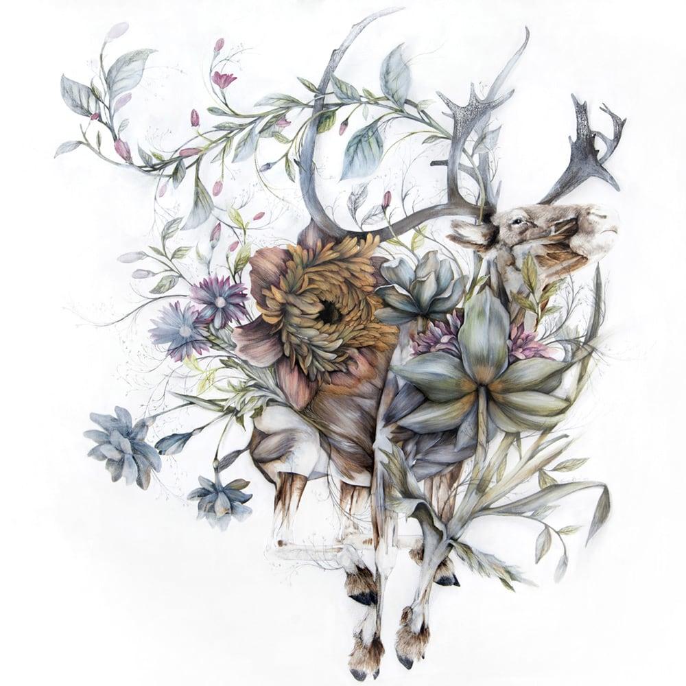 mimesis anatomical paintings flora and fauna nunzio paci fy 6