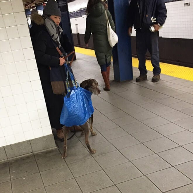 nyc subway banns dogs fy 1