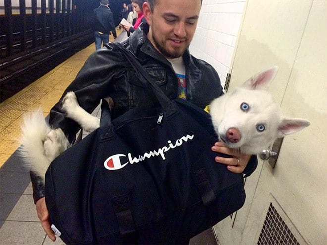 nyc subway banns dogs fy 10