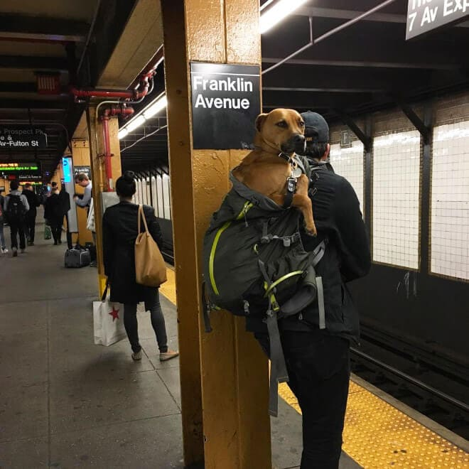 nyc subway banns dogs fy 11