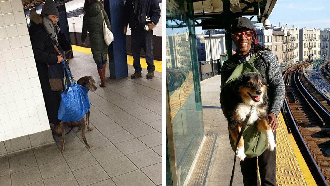 nyc subway banns dogs fy 12