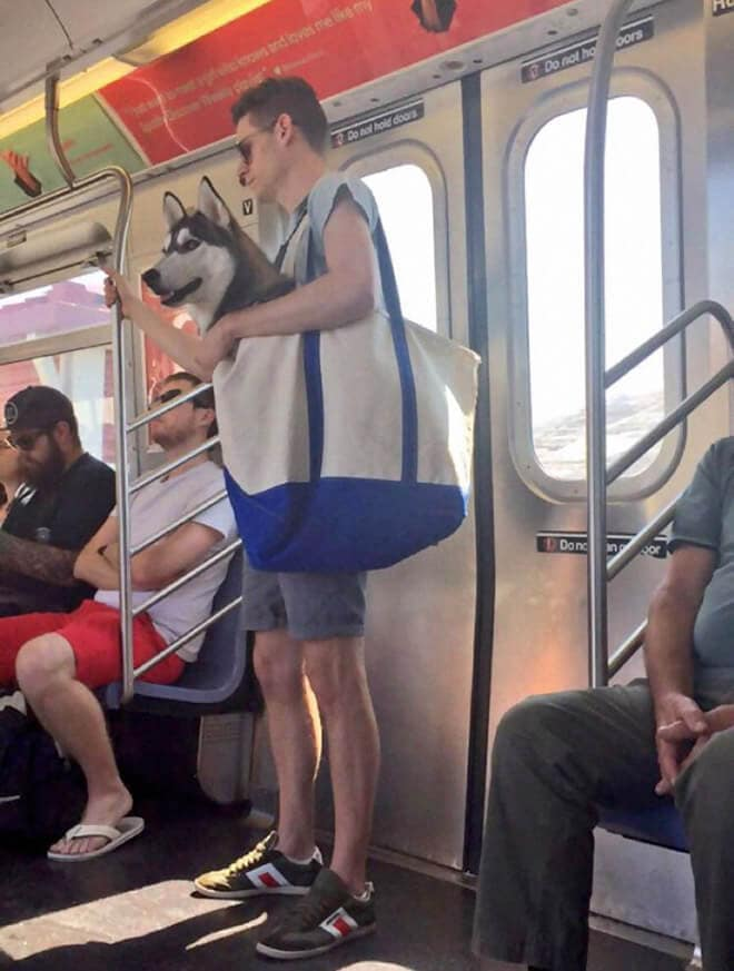 nyc subway banns dogs fy 2