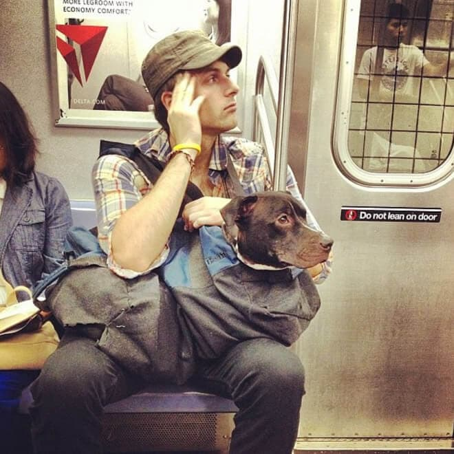 nyc subway banns dogs fy 3
