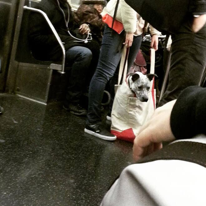 nyc subway banns dogs fy 6