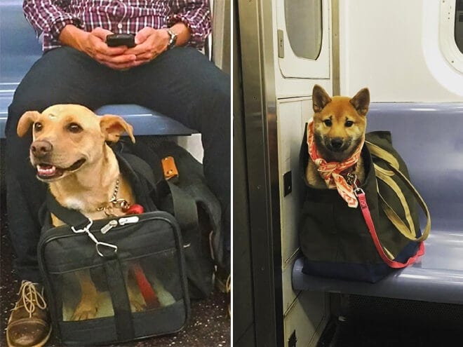 nyc subway banns dogs fy 7