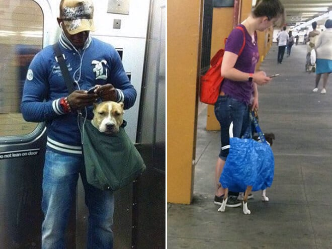 nyc subway banns dogs fy 9