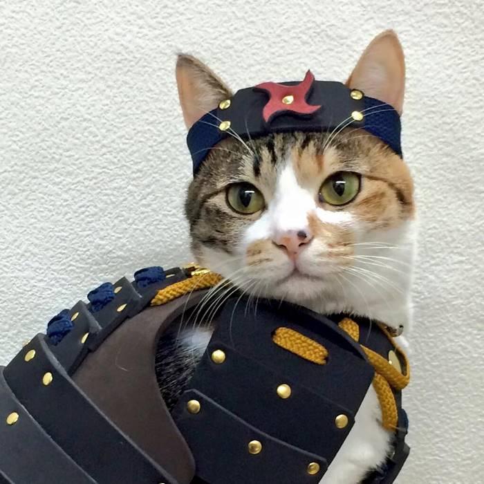 pet dog cat armor samurai age japan 3