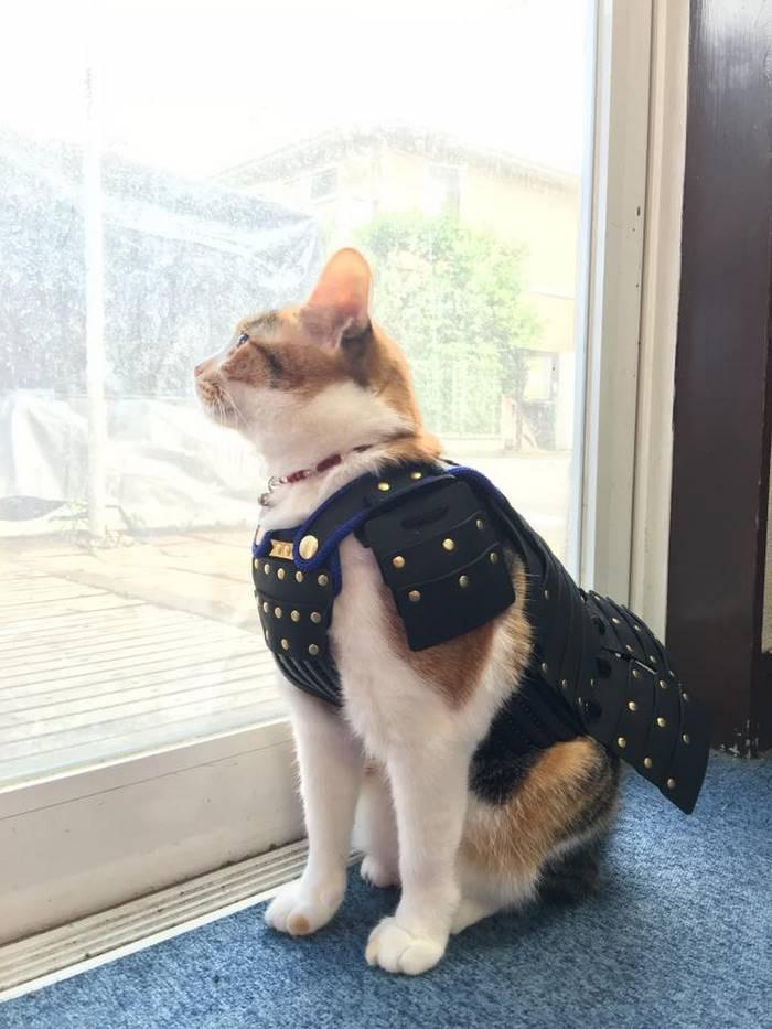 pet dog cat armor samurai age japan 4