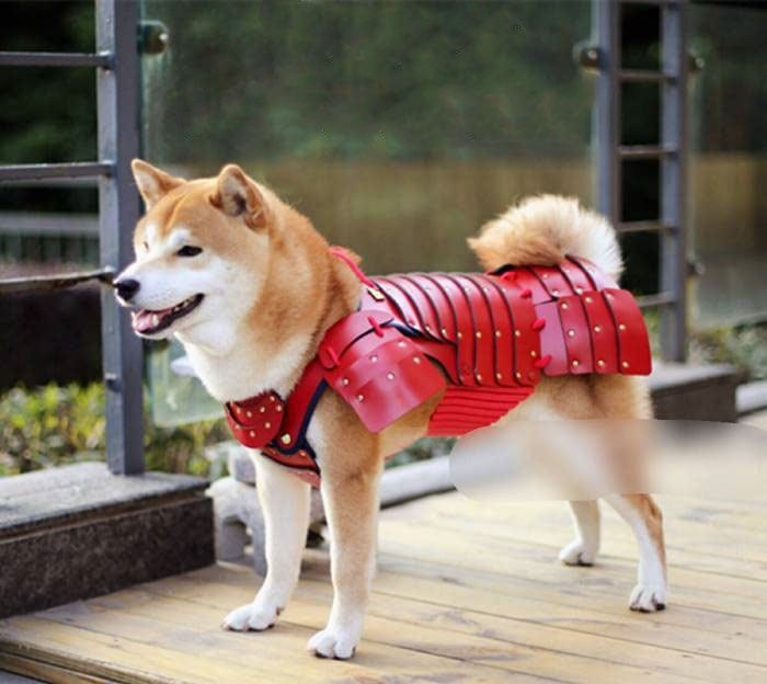 pet dog cat armor samurai age japan 8
