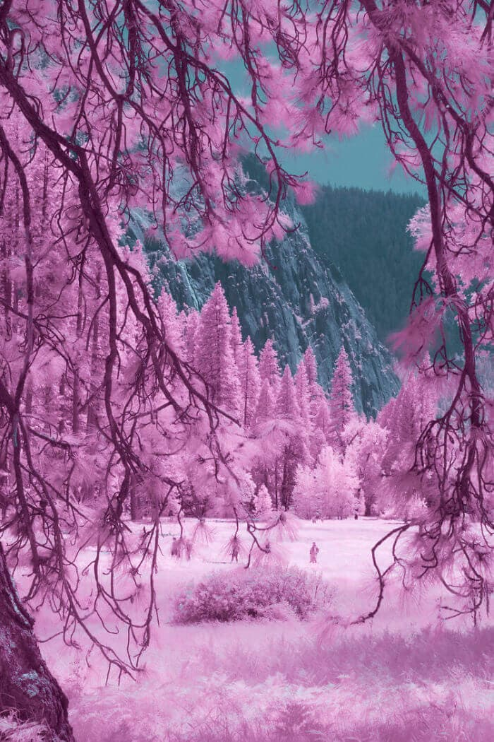 yosemite infrared photography fy 5
