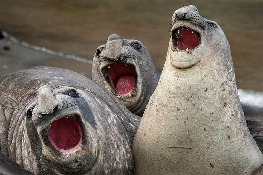 comedy wildlife photography awards 2017 fy 10