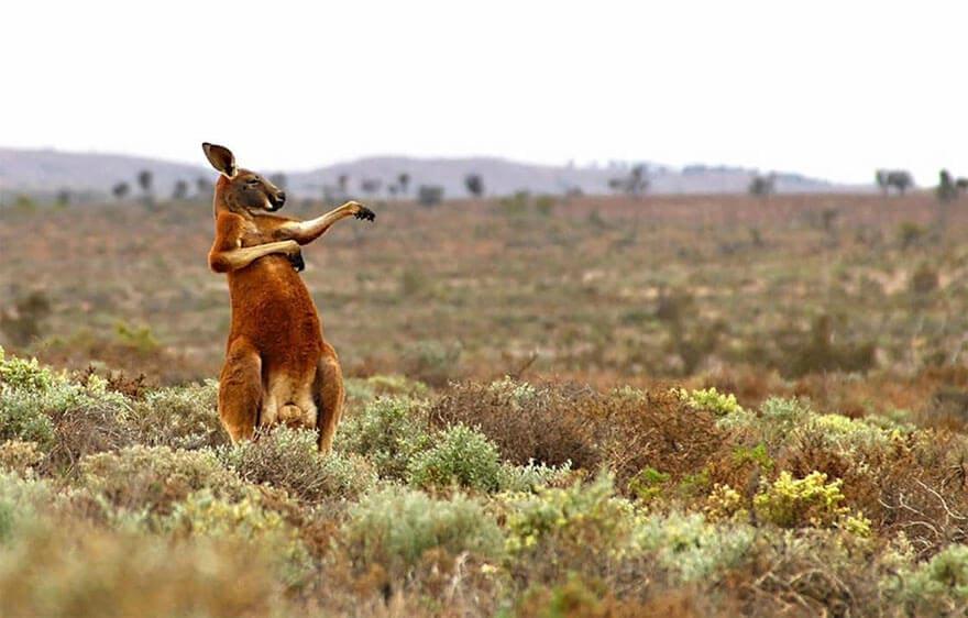 comedy wildlife photography awards 2017 fy 7