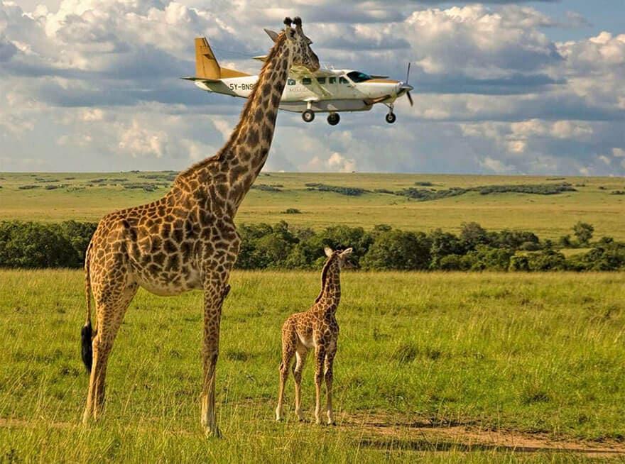 comedy wildlife photography awards 2017 fy 8