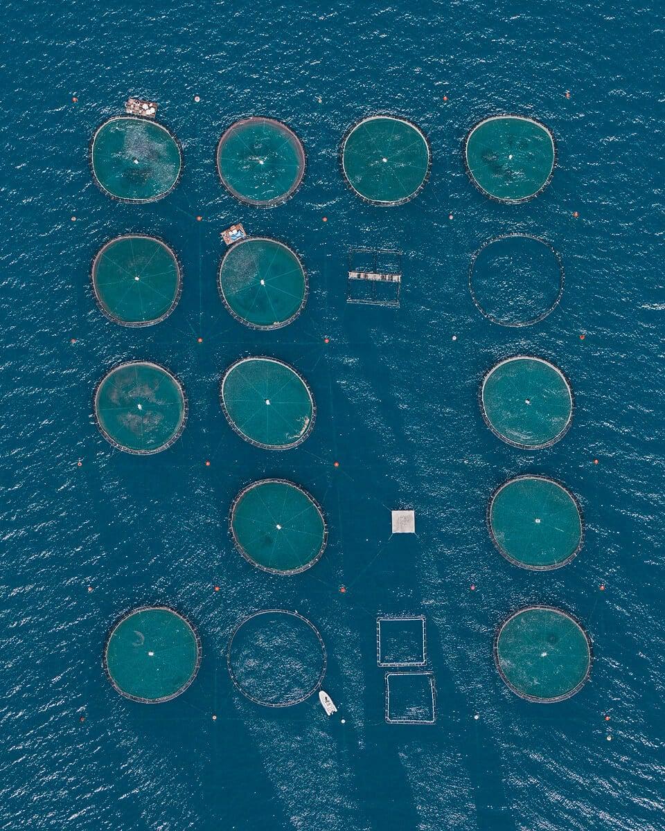 fish farms bernhard lang fy 1