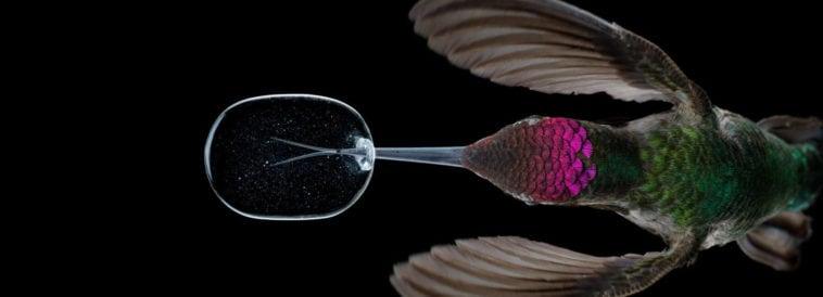 slow motion hummingbirds fy 1
