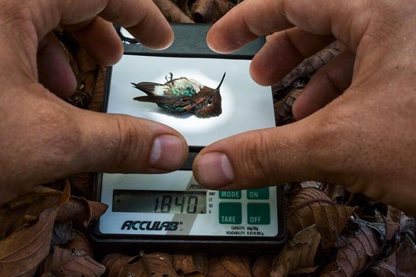 slow motion hummingbirds fy 2