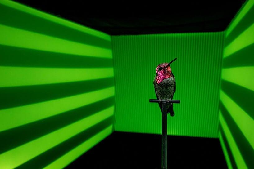 slow motion hummingbirds fy 4