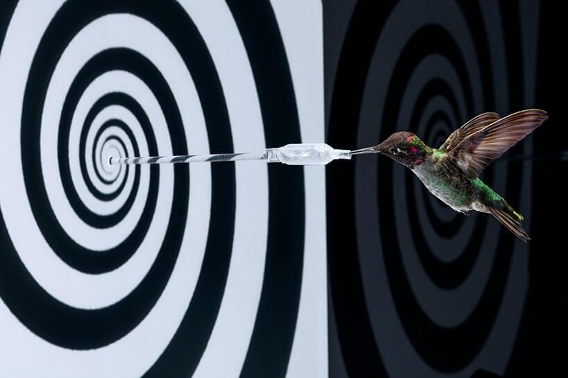 slow motion hummingbirds fy 6