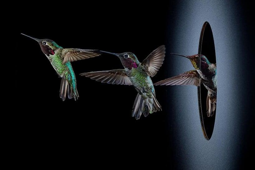 slow motion hummingbirds fy 8