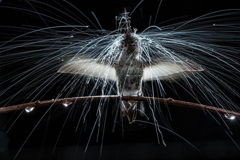 slow motion hummingbirds fy 9