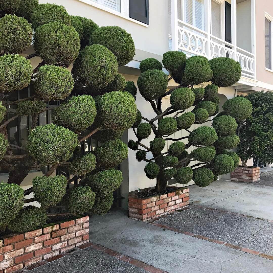 topiary kelsey mcclellan fy 1