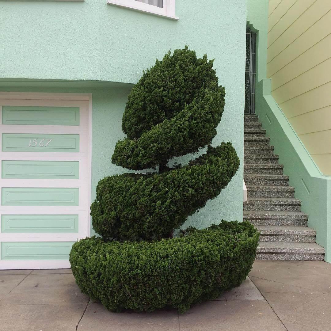 topiary kelsey mcclellan fy 2