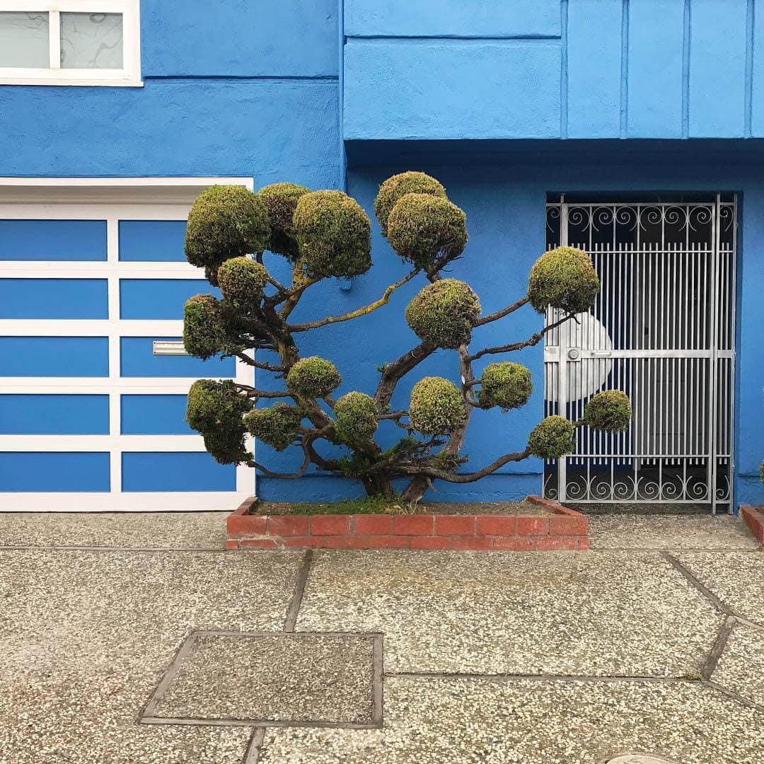 topiary kelsey mcclellan fy 4