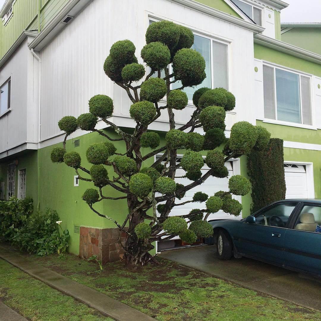 topiary kelsey mcclellan fy 5
