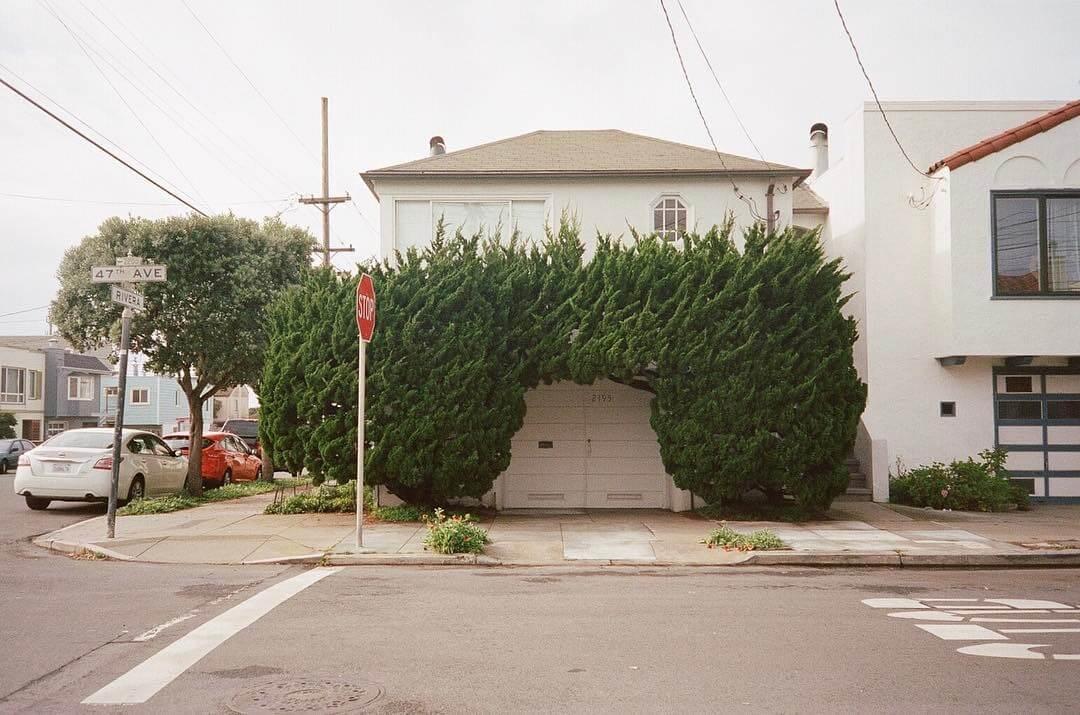topiary kelsey mcclellan fy 6