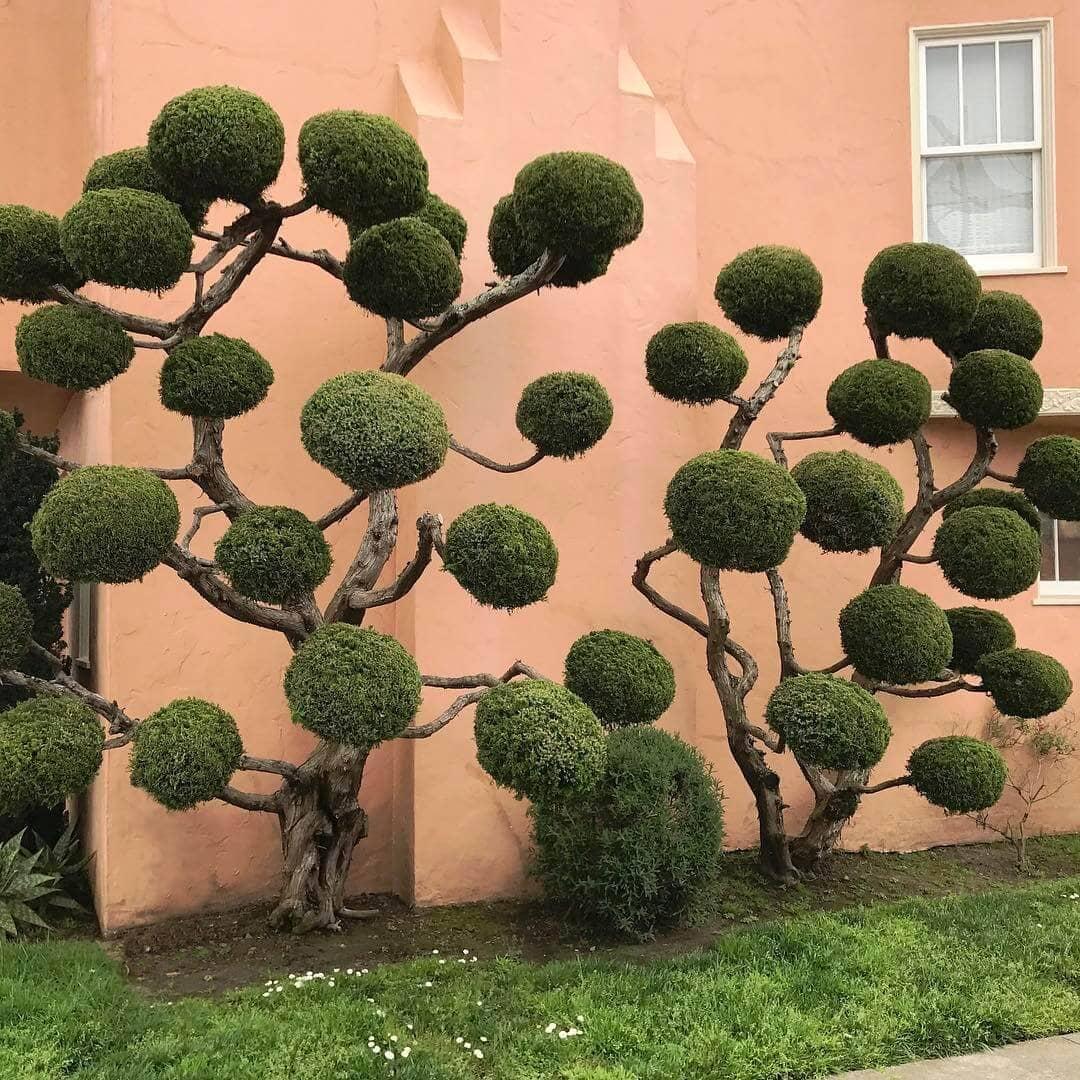 topiary kelsey mcclellan fy 7