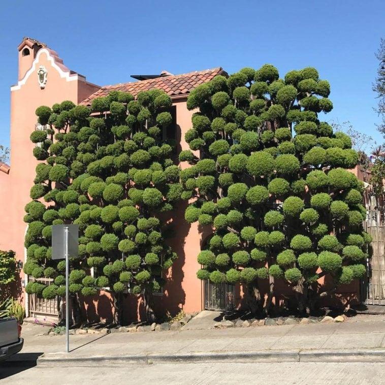 topiary kelsey mcclellan fy 8
