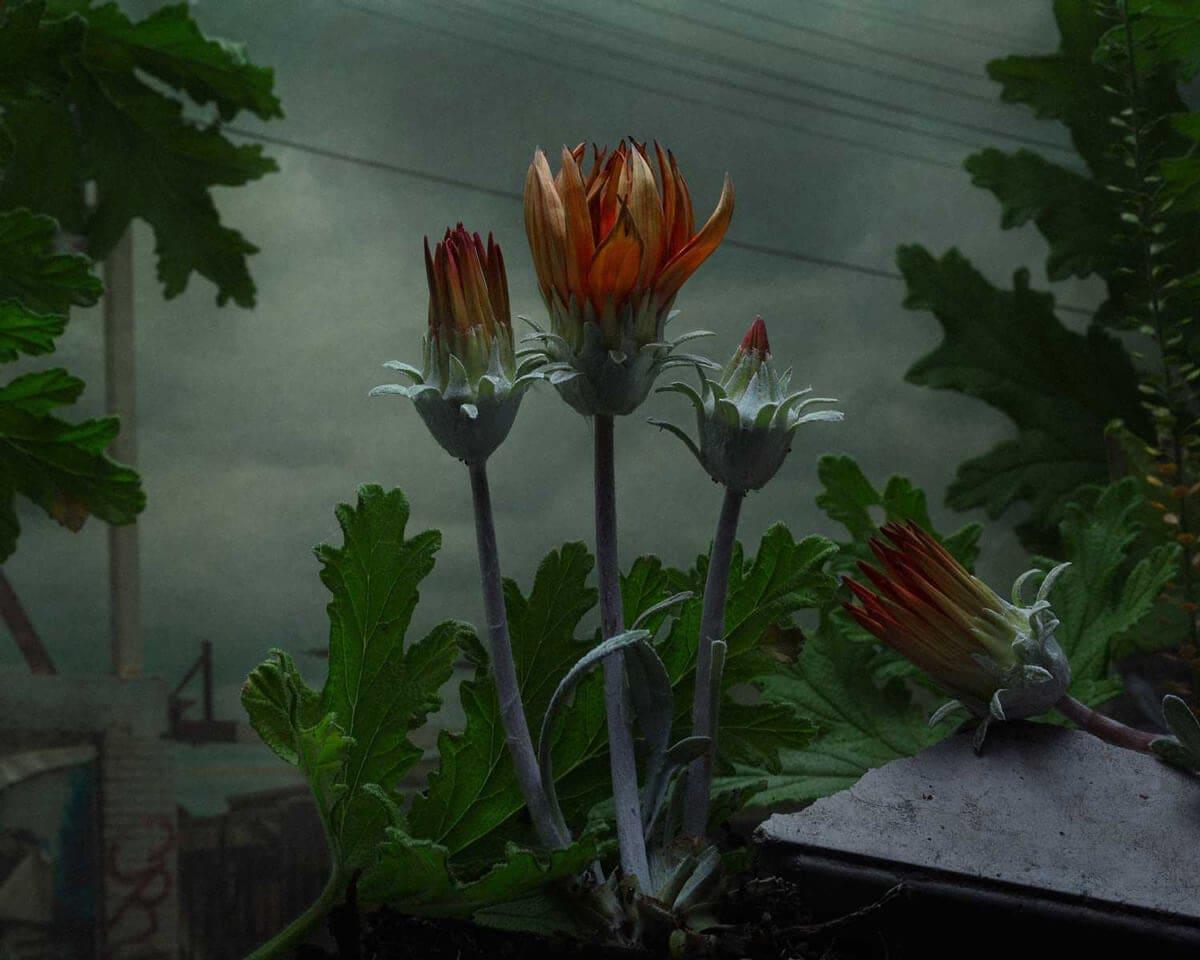 daniel shipp botanical inquiry freeyork 10