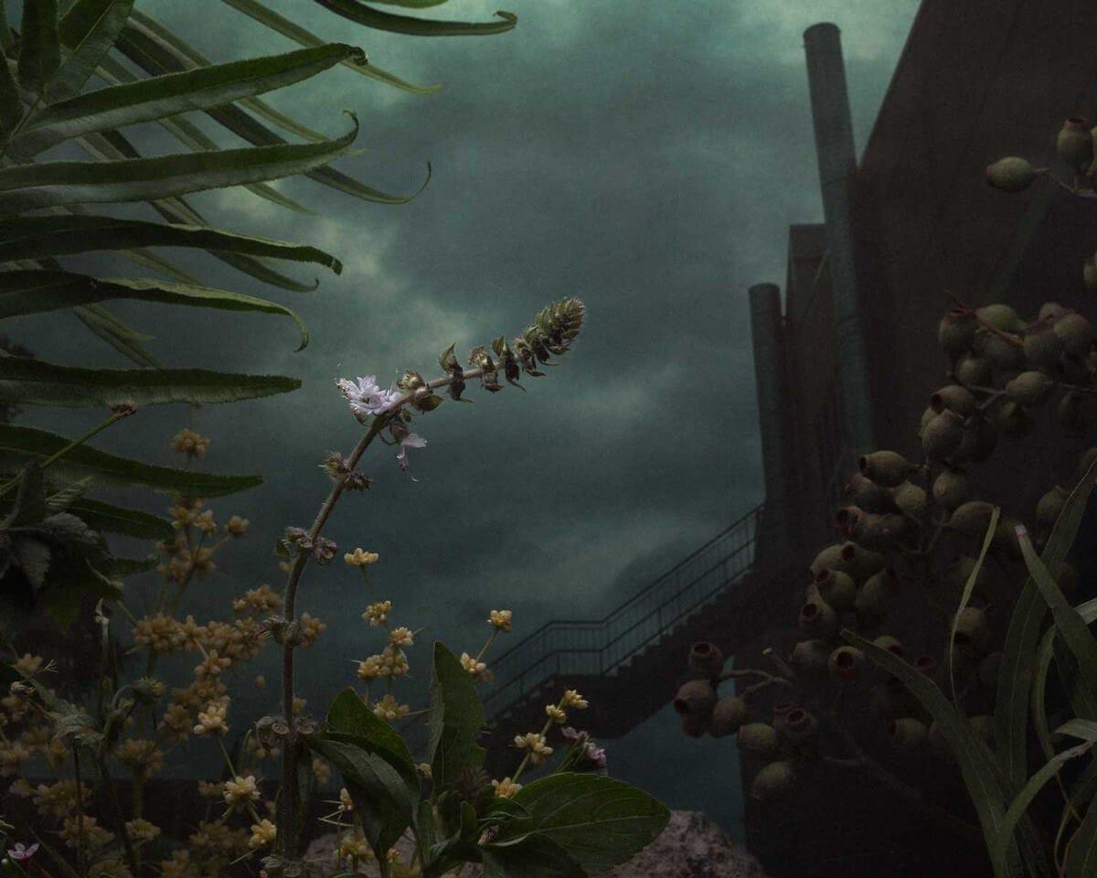 daniel shipp botanical inquiry freeyork 11