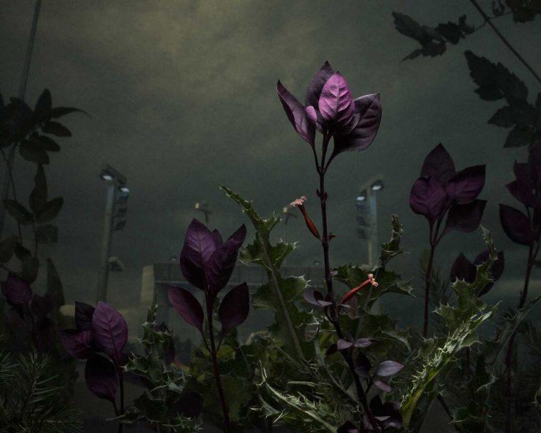 daniel shipp botanical inquiry freeyork 5