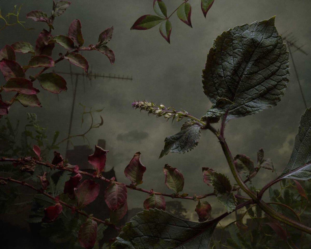daniel shipp botanical inquiry freeyork 6