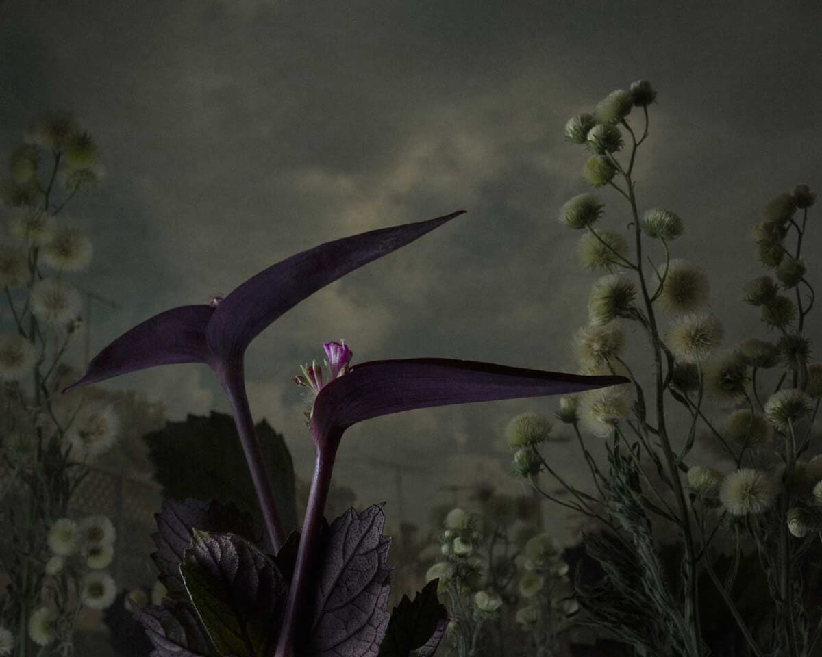 daniel shipp botanical inquiry freeyork 8