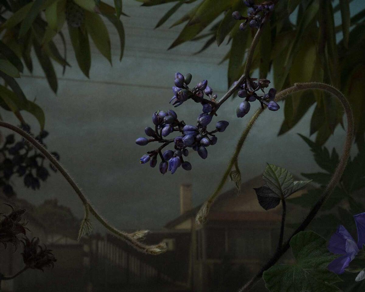 daniel shipp botanical inquiry freeyork 9