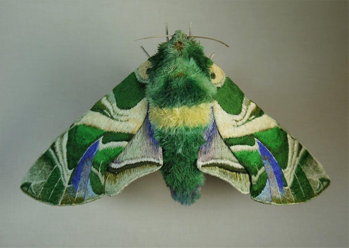 moth yumi okita fy 1